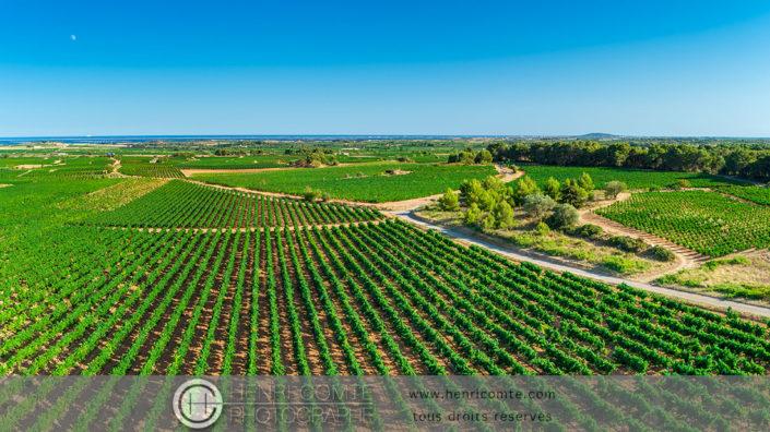 Vignoble AOP Picpoul de Pinet drone photo