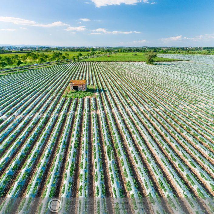 champ de melons drone