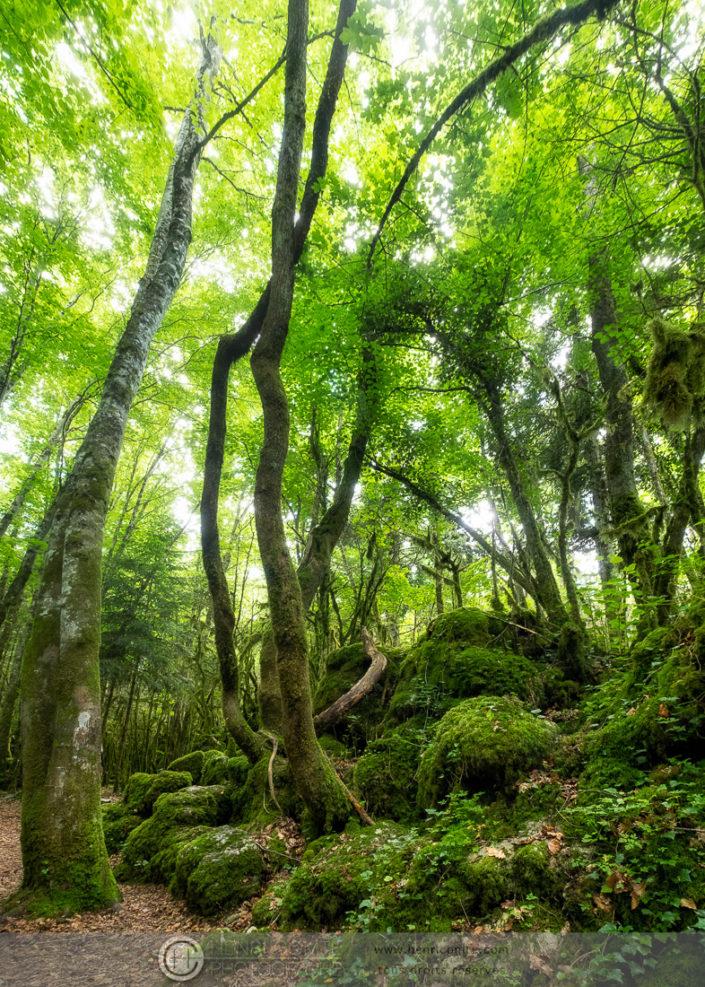 Forêt de Nebias - Le labyrinthe vert - Aude