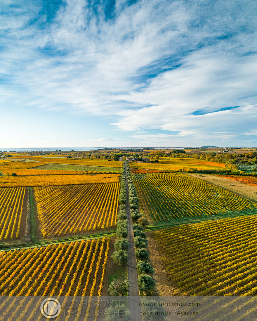 vignoble etang thau automne