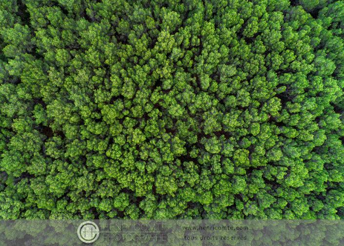 Photo en drone Pinede